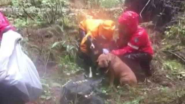 Annette sauvée avec ses chiens