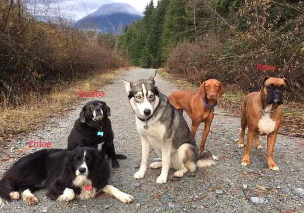 Les chiens Chloe, Bubba et Roxy