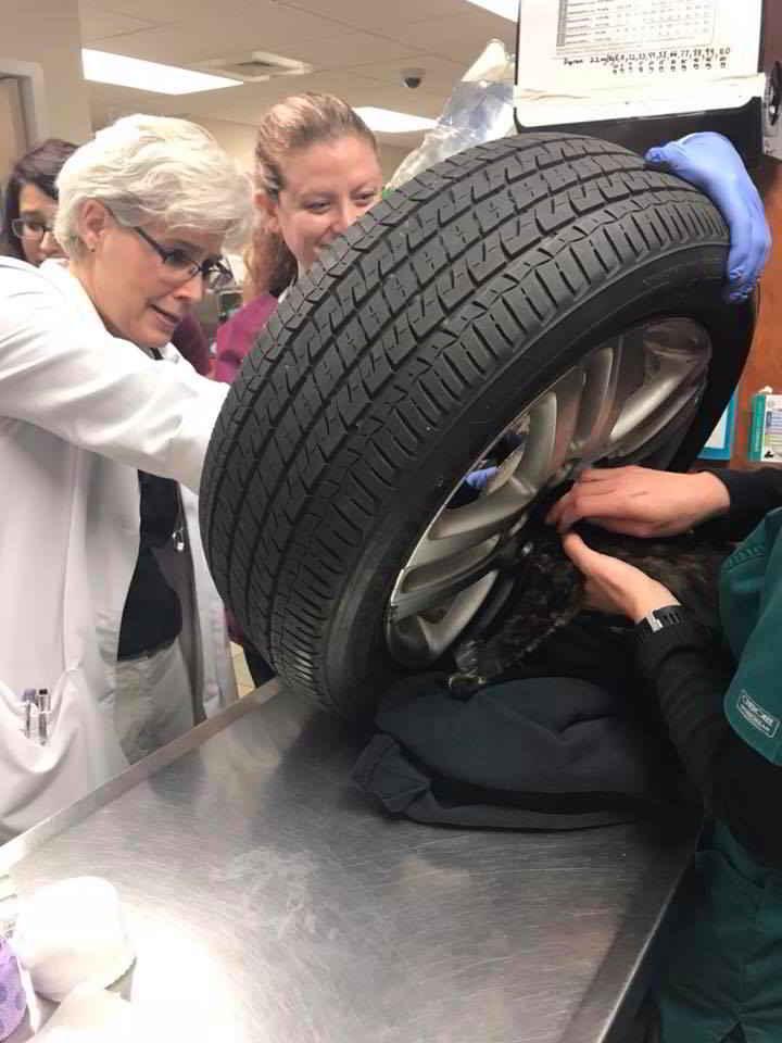 Le chaton coincé dans le pneu