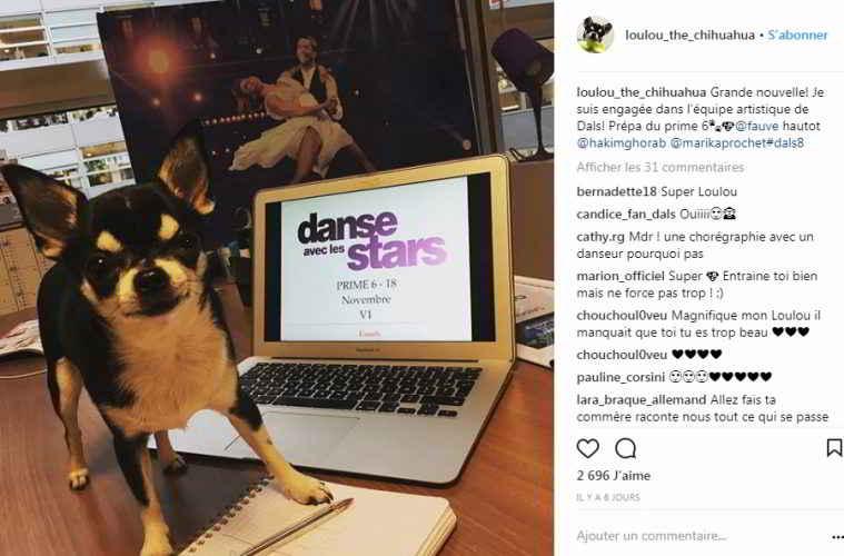 Lou le chihuahua de Danse avec les Stars