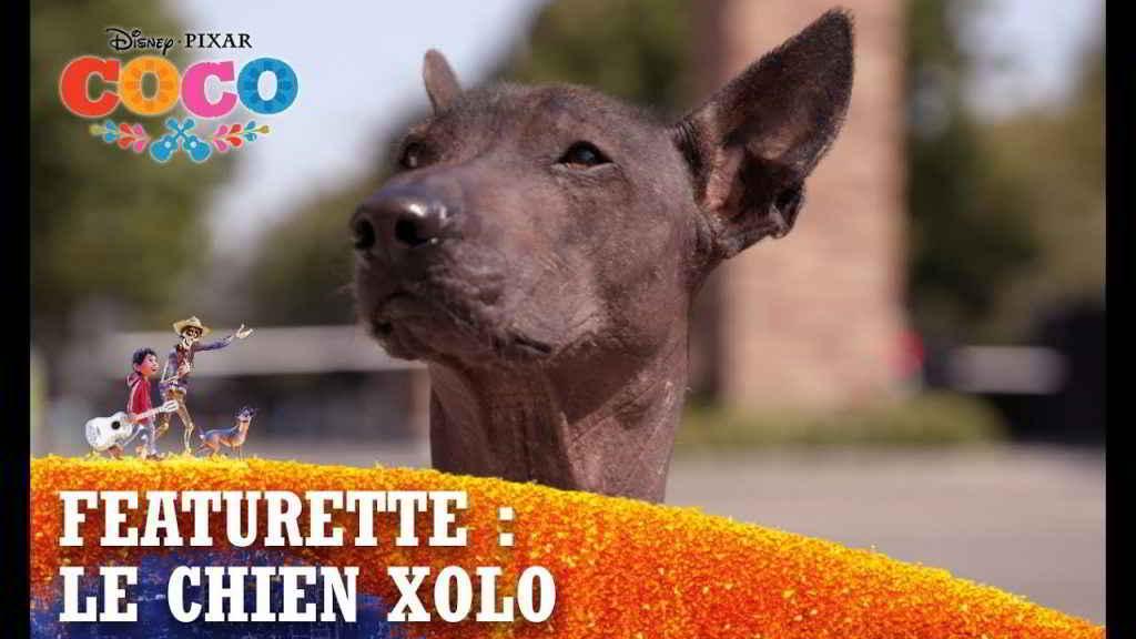 Chien nu mexicain Dante