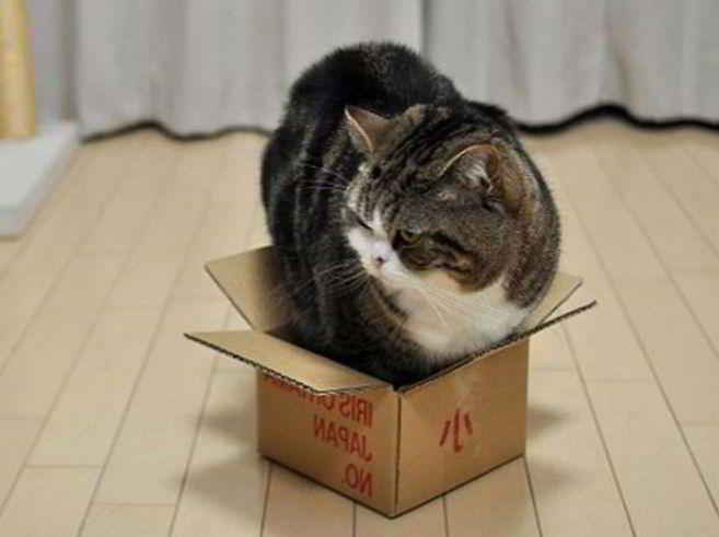 Photo d'illustration : Maru le Chat