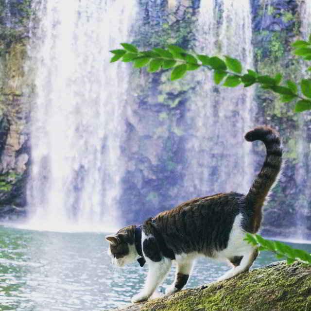 Pistachio le chat