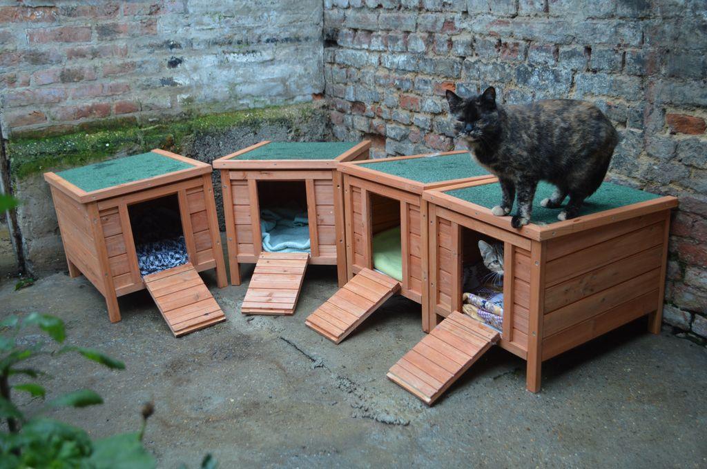 Abris installés pour les chats des rues