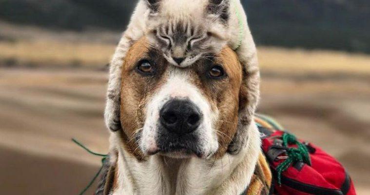 Henry le chien et Baloo le chat