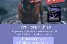 fortiflora-chien
