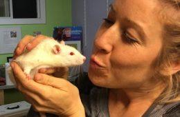 Les rats de laboratoire sont sauvés