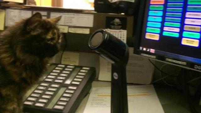 Le chaton policier / Ville de Tryon