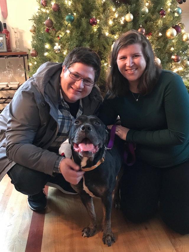 Le pit bull Bailey et sa nouvelle famille