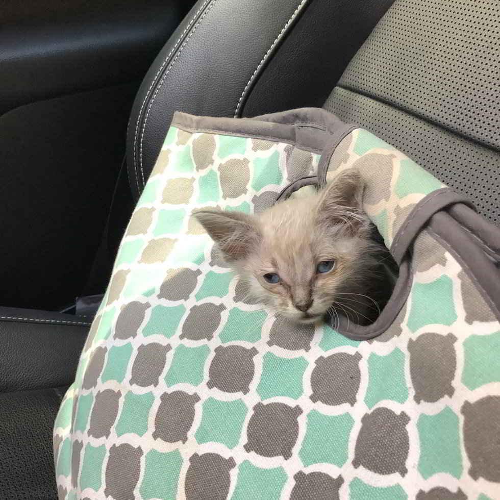 La petite chatte abandonnée