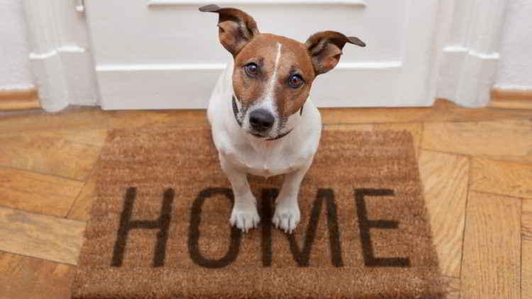 Un chien à la maison