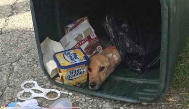 La chienne abandonnée dans une poubelle