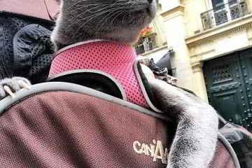 MaoMay la chatte