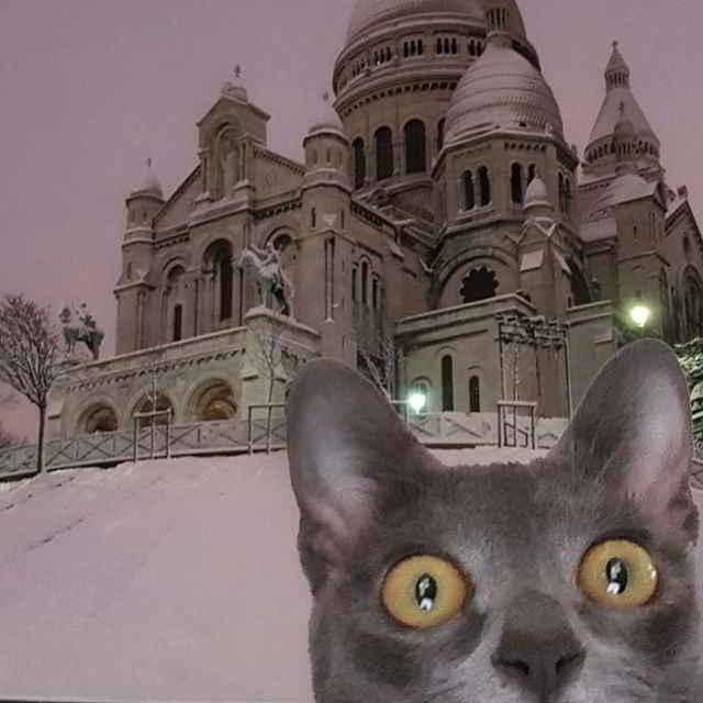 MaoMay la chatte en voyage