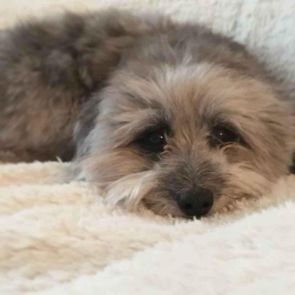 Dakota la petite chienne