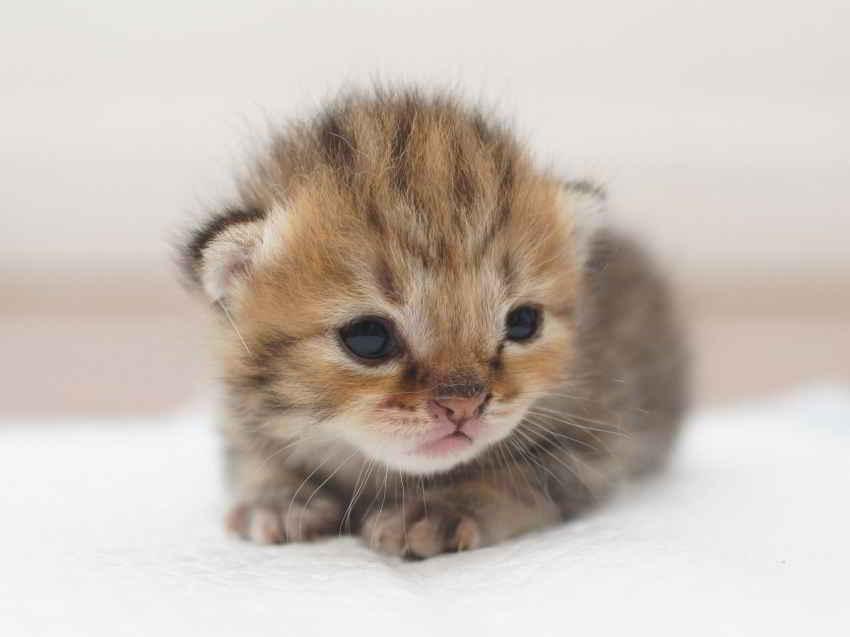 L'arrivée d'un chaton