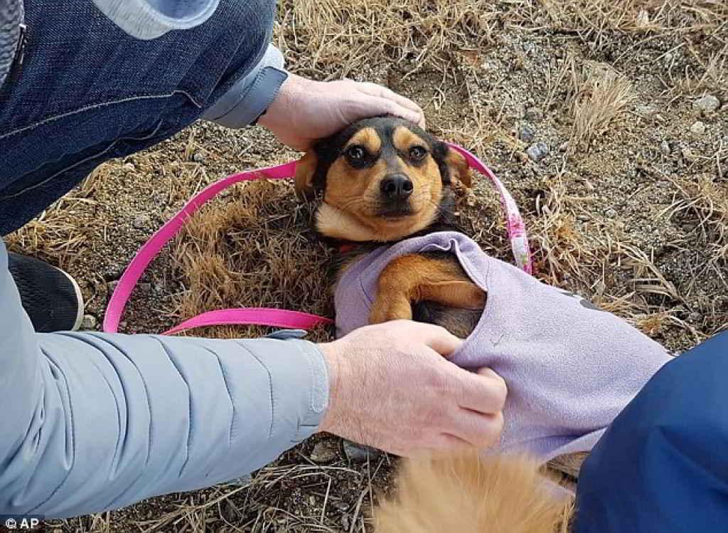 Meagan Duhamel sauve un chien