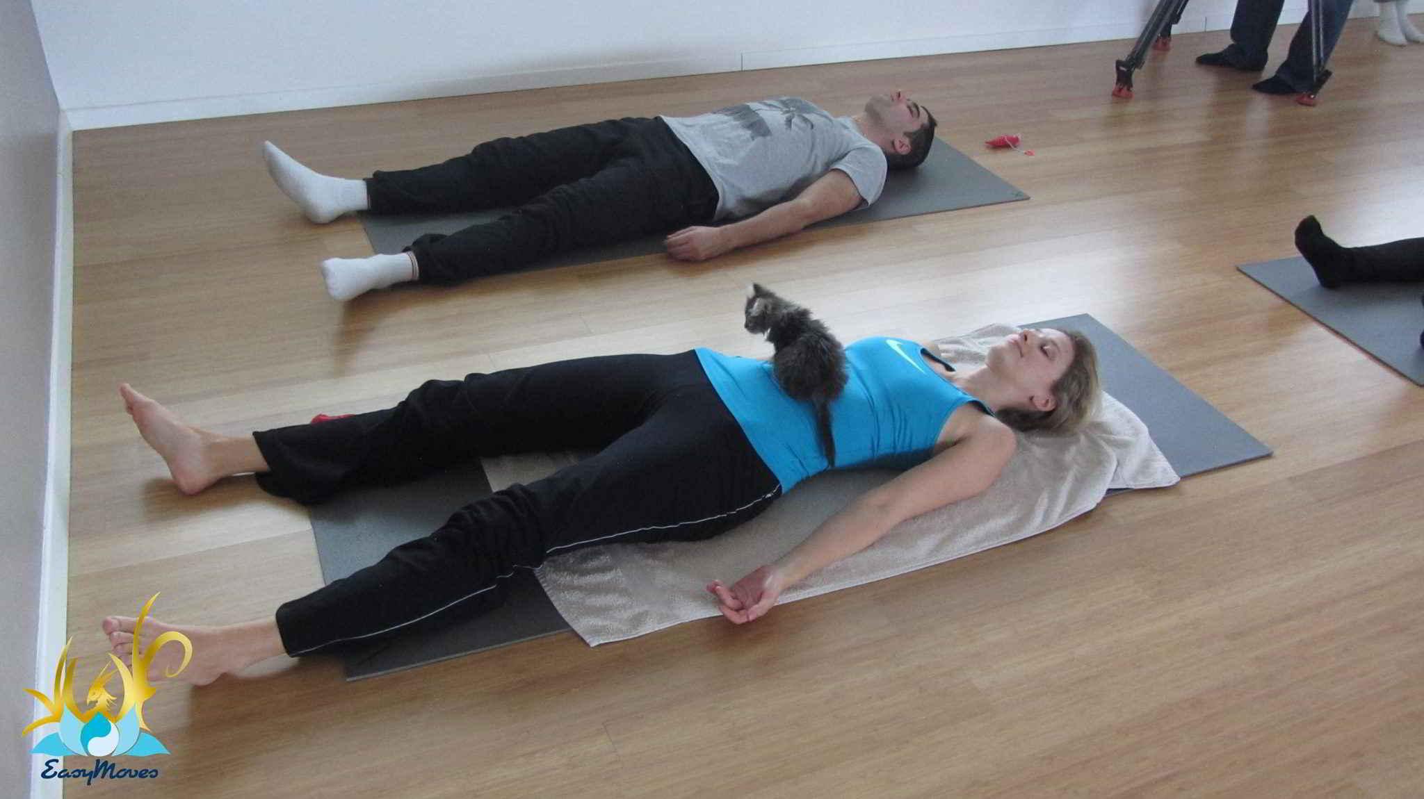 Yoga Cat Yoga avec de chats