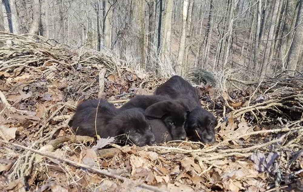 Les chiots abandonnés dans la forêt