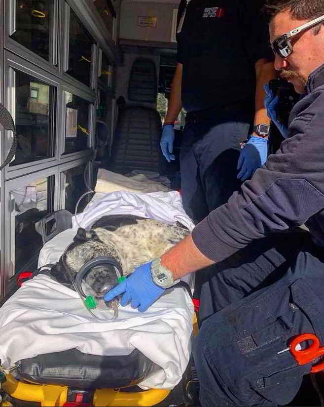 Boo le chien sauvé par les pompiers
