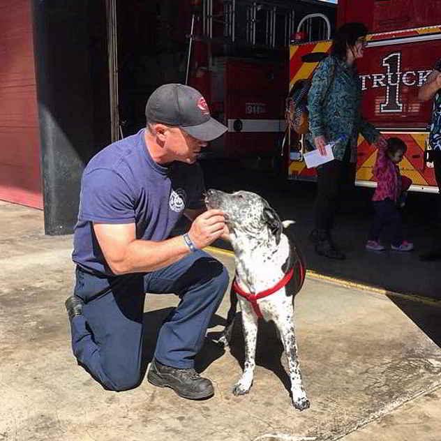 Les pompiers et le chien Boo