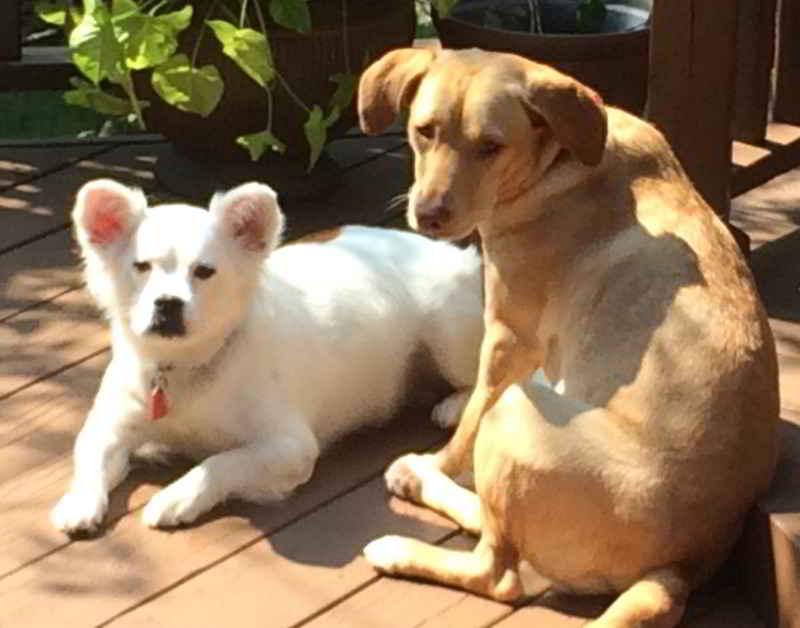 Belle et Crew les chiens héros