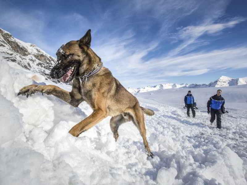 Sonni le chien d'Avalanche