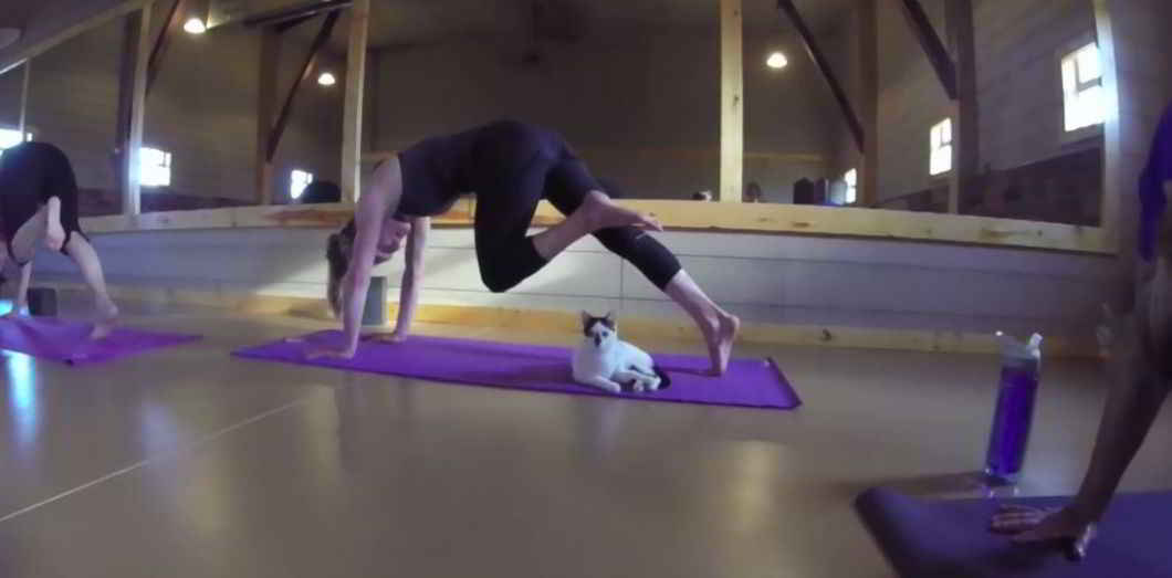 Yoga Cat Yoga avec de chats