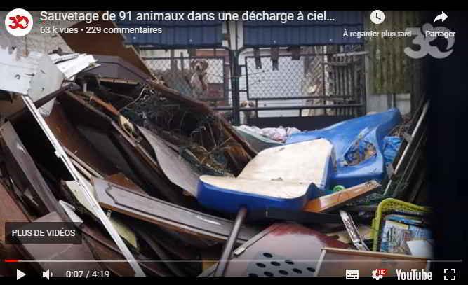 Sauvetage à Dax par 30 Millions d'Amis