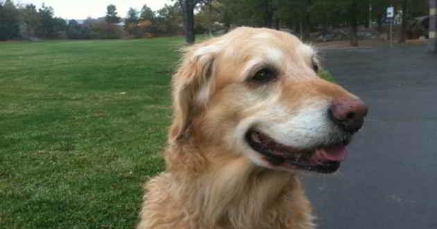 Toby le chien héros