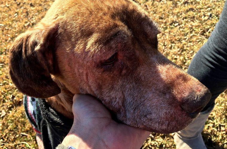 Ashlyn la chienne est sauvée