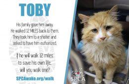 Toby le chat courageux