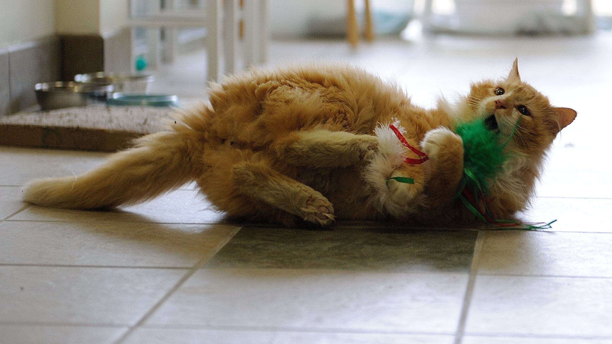 Toby est un chat heureux