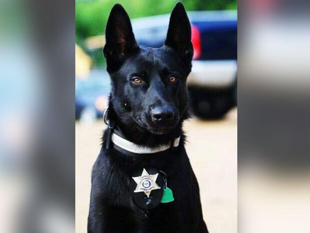 Lucas le chien policier