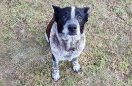 Max le chien héros