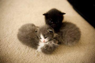 Les chatons recueillis