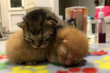 Les chatons ont été sauvés