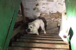 La chienne abandonnée