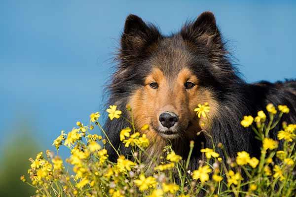 Plantes toxiques pour le chien