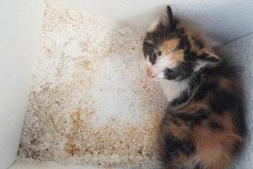 Le chaton enfermé dans la boîte