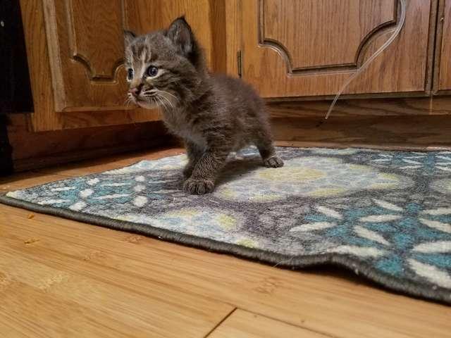 Le chaton pris en charge par Yost