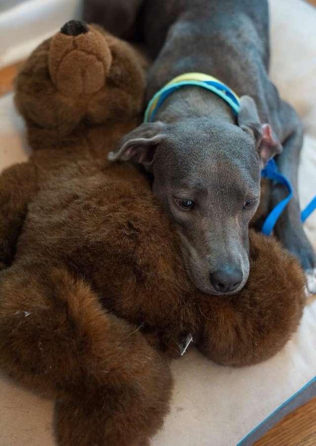 Ellie et son ours en peluche au refuge