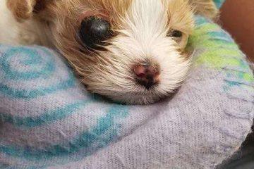 Le petit chiot chez le vétérinaire