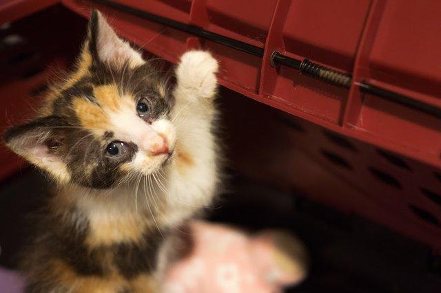 Annie, la petite chatte prise en charge
