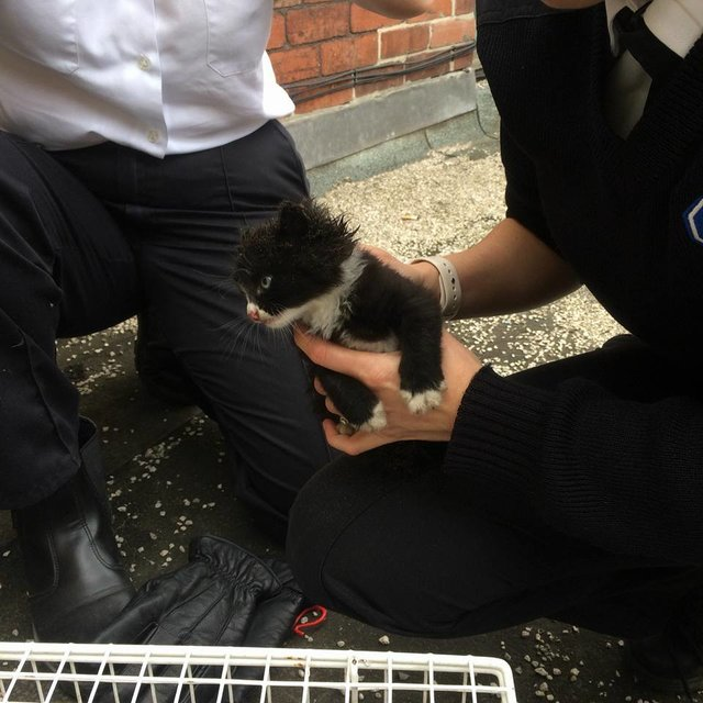 Le chaton sauvé