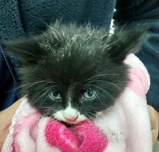Turpin, le chaton miraculé