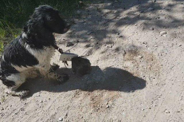 Le chien retrouvé avec une ancre autour du cou