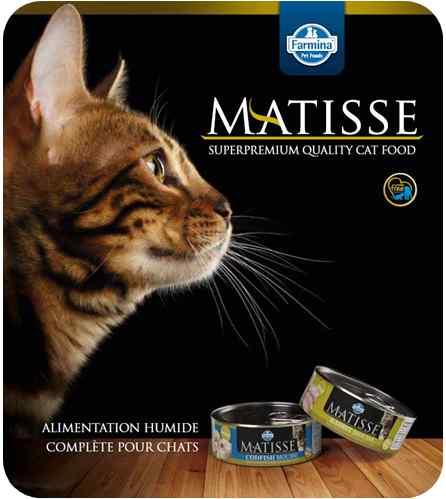 Mousse matisse pour chats