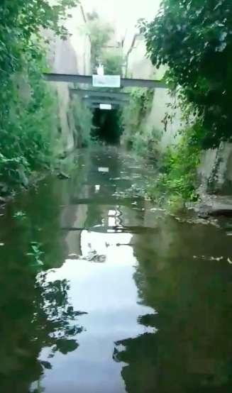 Le tunnel dans lequel se trouvent les canetons