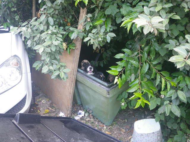 Neuf petits chiots dans une poubelle
